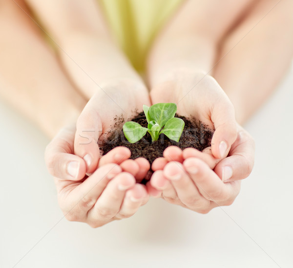 Stock photo: close up of child and parent hands holding sprout