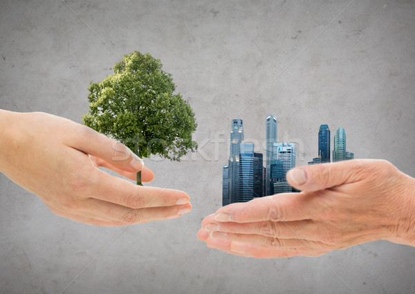 hands holding green oak tree and city buildings Stock photo © dolgachov