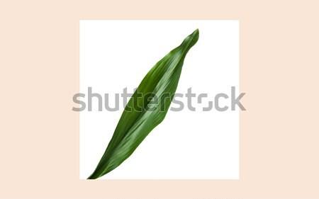 Hoja verde cuadrados marco beige naturaleza orgánico Foto stock © dolgachov