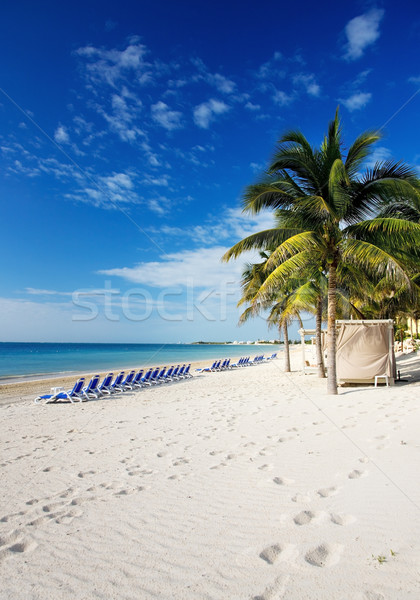 tropical resort Stock photo © dolgachov