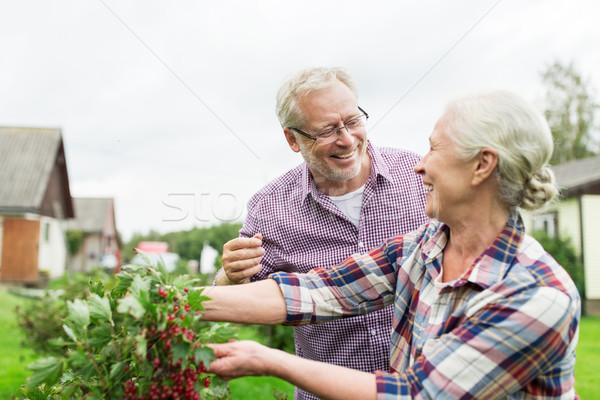 Idős pár aratás ribiszke nyár kert gazdálkodás Stock fotó © dolgachov