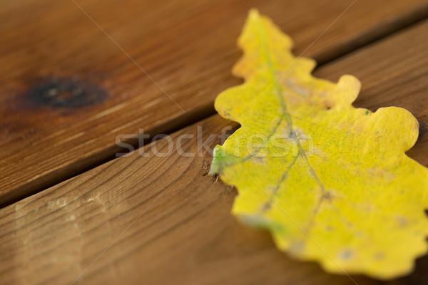 close up of yellow oak tree autumn leaf on wood Stock photo © dolgachov