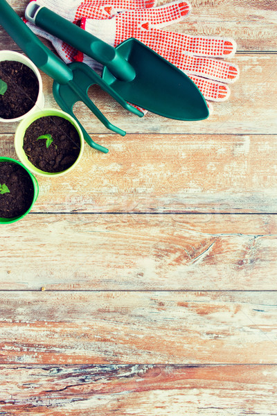 close up of seedlings and garden tools Stock photo © dolgachov