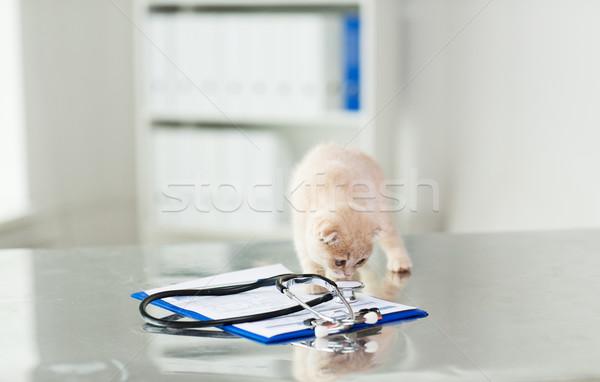 close up of scottish fold kitten at vet clinic Stock photo © dolgachov