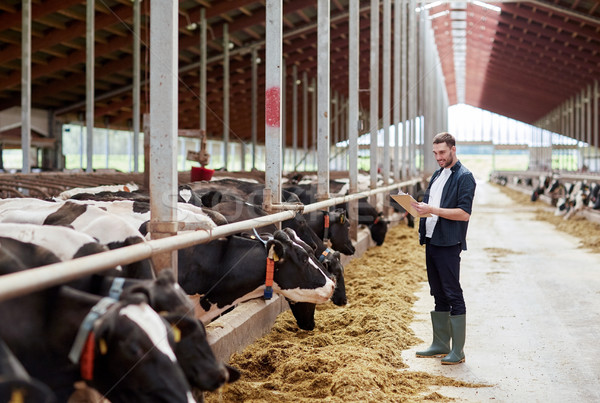 man with clipboard and cows at dairy farm cowshed Stock photo © dolgachov