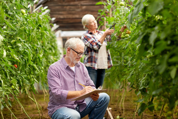 Pareja de ancianos creciente tomates granja invernadero Foto stock © dolgachov
