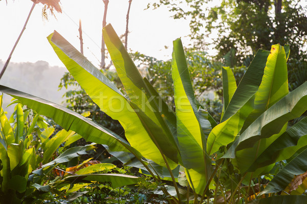 green palm tree leaves outdoors Stock photo © dolgachov