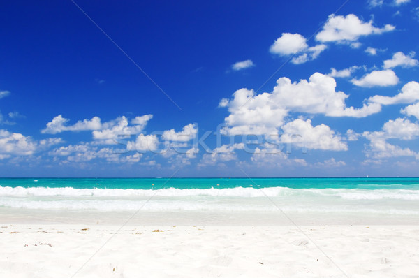 tropical beach Stock photo © dolgachov