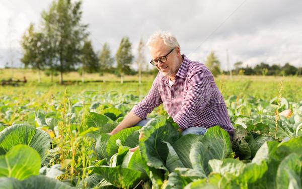 senior man growing white cabbage at farm Stock photo © dolgachov