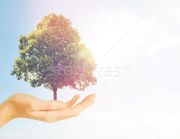 Kéz tart zöld tölgyfa szürke természet Stock fotó © dolgachov