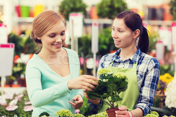 happy women choosing flowers in greenhouse Stock photo © dolgachov