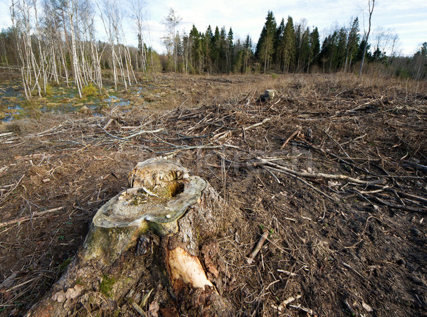 Deforested area Stock photo © donatas1205
