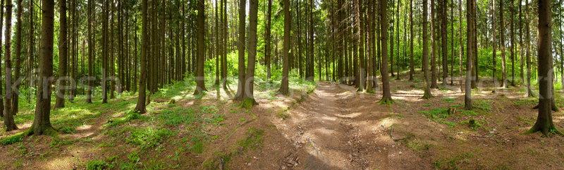 forest Stock photo © donatas1205