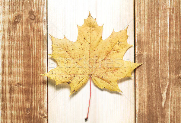 Drapeau canadien pavillon Canada bois design art Photo stock © donatas1205