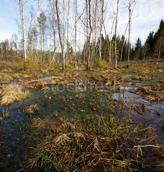 Swamp Stock photo © donatas1205
