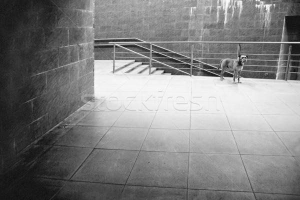Metropolitana passaggio cane attesa proprietario città Foto d'archivio © donatas1205
