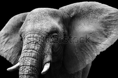 Művészi feketefehér elefánt közelkép afrikai elefánt textúra Stock fotó © Donvanstaden