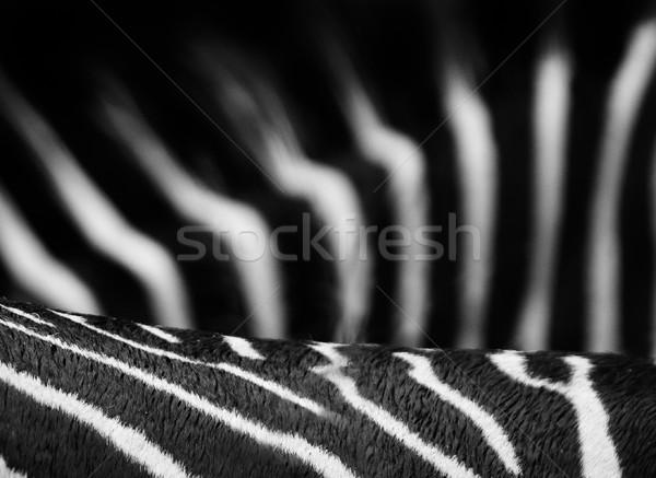 Zebra csíkok feketefehér természet fekete park Stock fotó © Donvanstaden