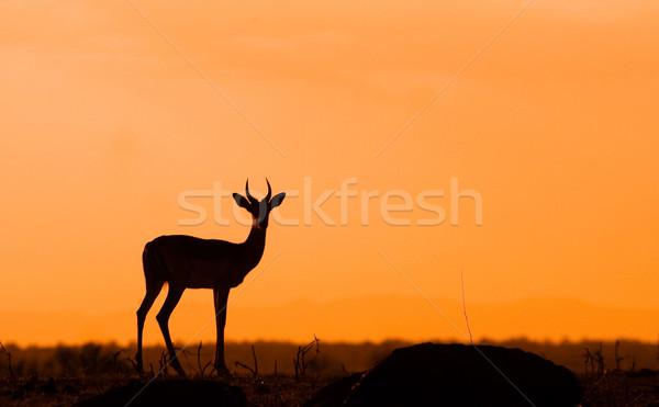 Impala Silhouette Stock photo © Donvanstaden