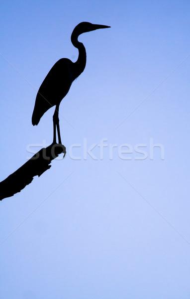 Silhouet reiger dramatisch zonsondergang vogel zwarte Stockfoto © Donvanstaden