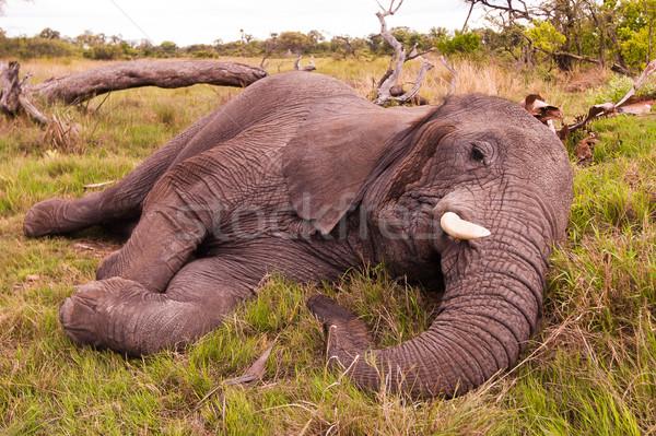 Stock fotó: Elefánt · alszik · afrikai · elefánt · vad · víz · természet