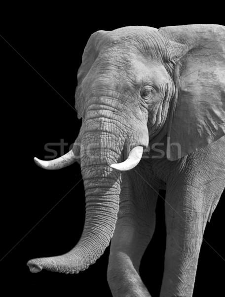 Artistic Black and White Elephant Stock photo © Donvanstaden
