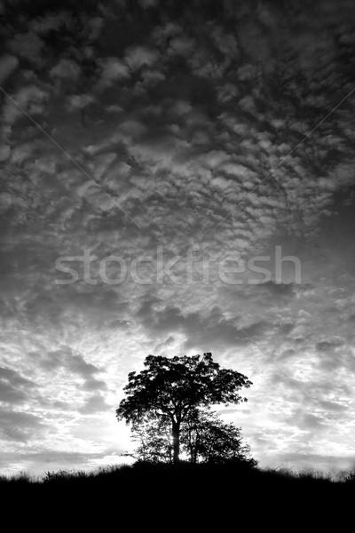 Magányos fa domb feketefehér égbolt fű Stock fotó © Donvanstaden