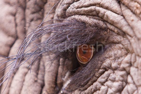 Elefánt szem közelkép makró lövés természet Stock fotó © Donvanstaden
