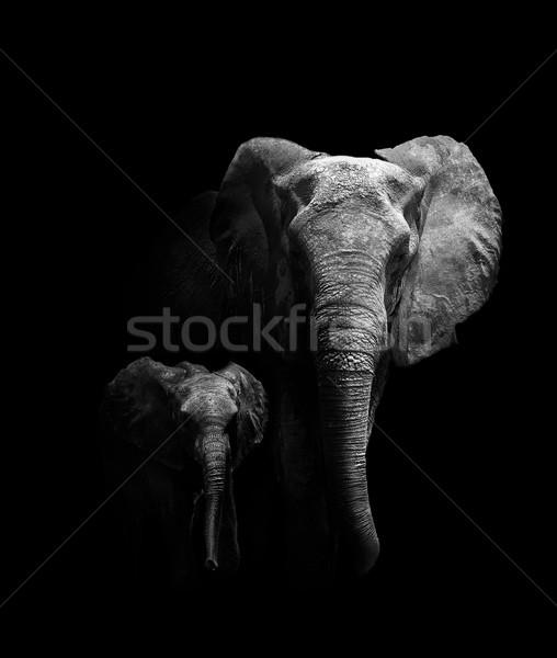 Anya baba elefánt sétál kreatív természet Stock fotó © Donvanstaden