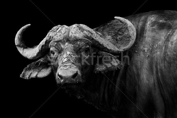 Feketefehér művészi kép vad afrikai természet Stock fotó © Donvanstaden