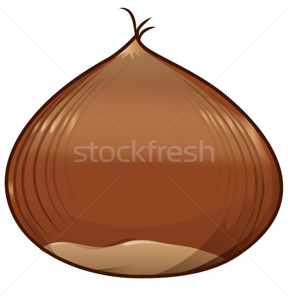 chestnut isolated on white background Stock photo © doomko