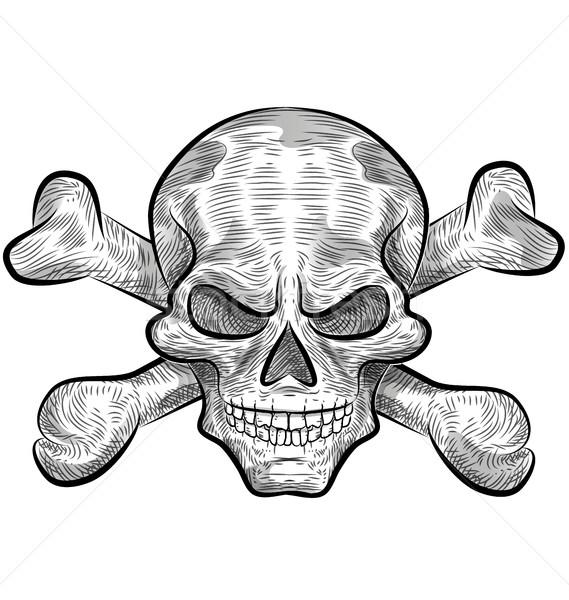 Kafatası kroki dizayn beyaz yüz Stok fotoğraf © doomko