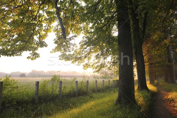 Zonsopgang mooie steegje vers ochtend zon Stockfoto © dotshock