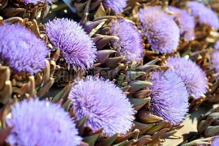 artichoke purple flower Stock photo © dotshock