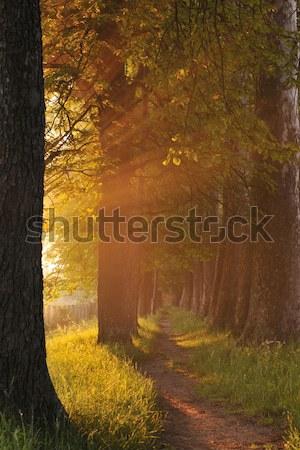 Amanecer hermosa callejón frescos manana sol Foto stock © dotshock