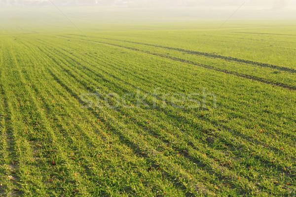 зеленая трава красивой закат природы небе цветок Сток-фото © dotshock