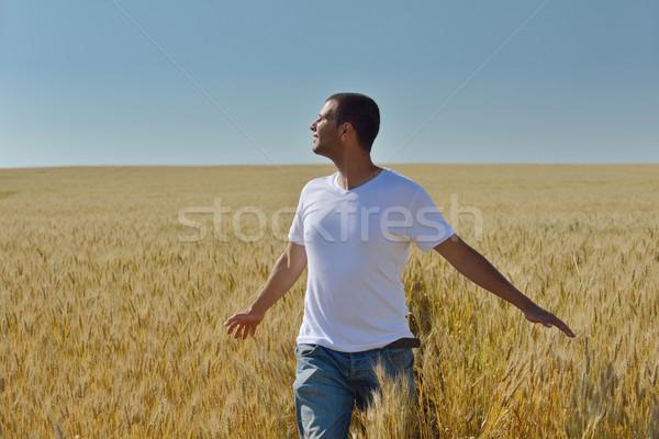 Homem campo de trigo moço sucesso agricultura liberdade Foto stock © dotshock