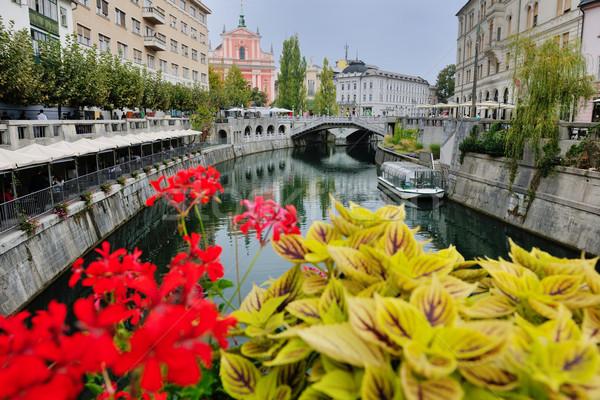 Slovenia città vecchio ponte fiore fiume Foto d'archivio © dotshock