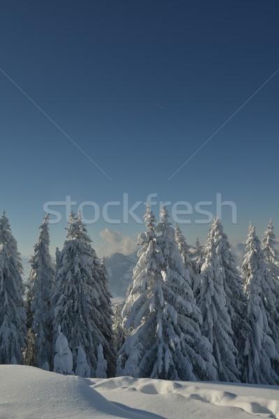 Hegy tél tájkép természet fa friss Stock fotó © dotshock