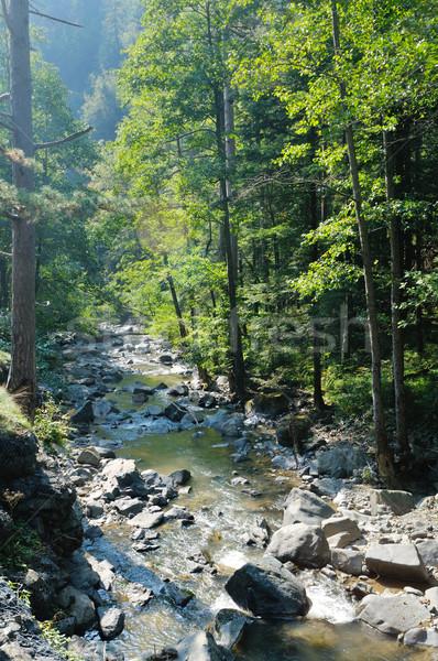 Tatlısu dere orman güzel doğa Stok fotoğraf © dotshock