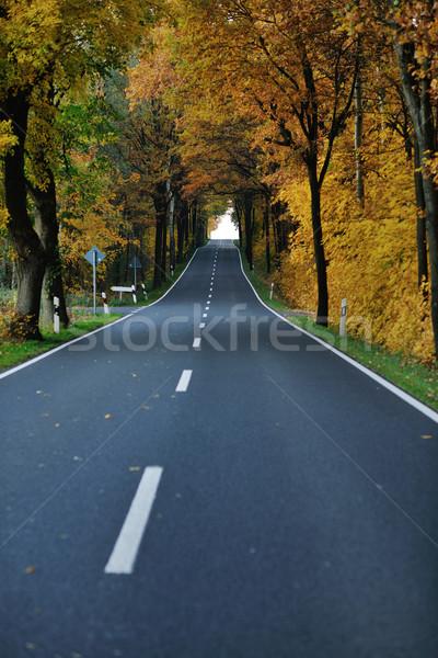 country road Stock photo © dotshock