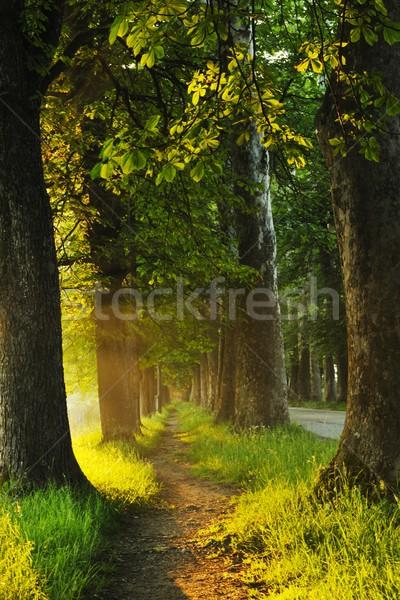 Восход красивой аллеи свежие утра солнце Сток-фото © dotshock