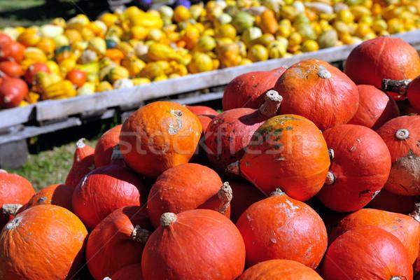 pumpkins background Stock photo © dotshock