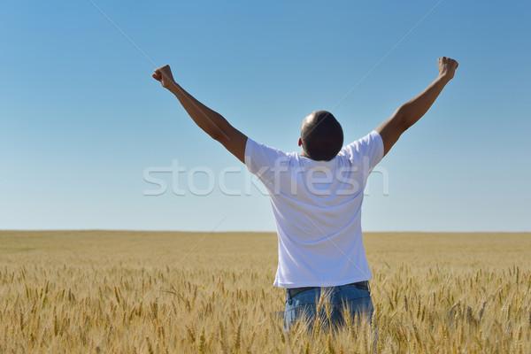 Stock fotó: Férfi · búzamező · fiatalember · siker · mezőgazdaság · szabadság