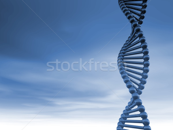 DNA strands Stock photo © drizzd