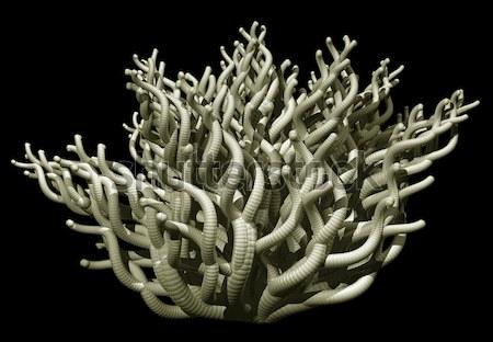 чужеродные завода аннотация органический форме черный Сток-фото © drizzd