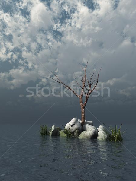 dead tree Stock photo © drizzd
