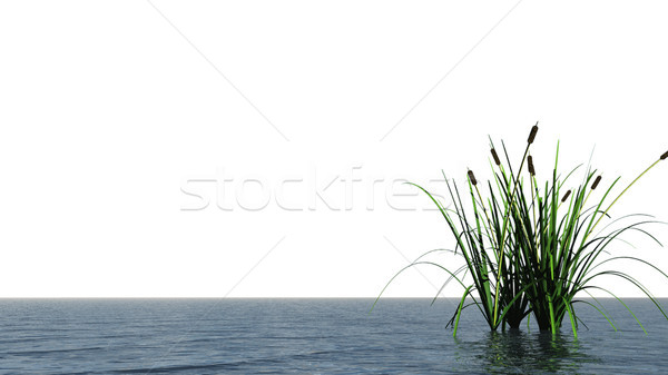 water and reed Stock photo © drizzd