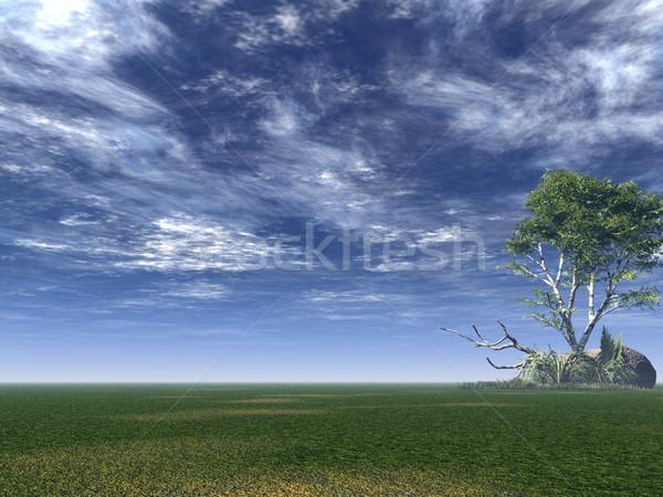 Nyírfa magányos zöld mező 3d illusztráció felhők Stock fotó © drizzd