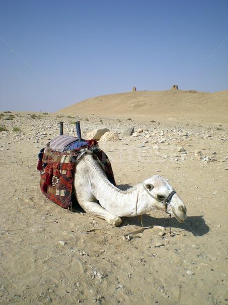верблюда лице здании Азии арабских древних Сток-фото © Dserra1